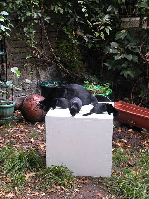 nikki-soul-cats.jpg