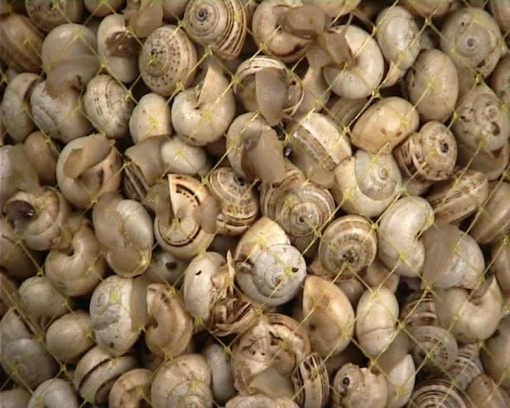 snails_02.jpg